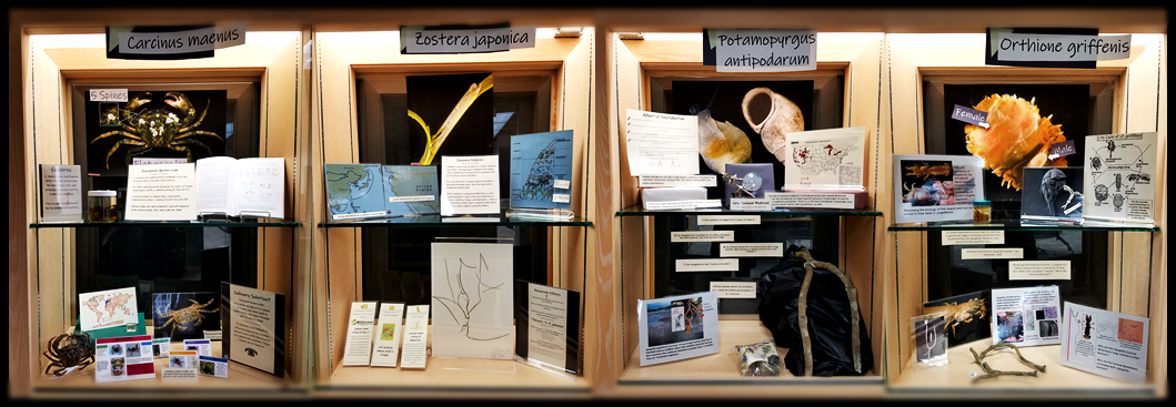 Guin Library Yaquina Bay aquatic invasive species display
