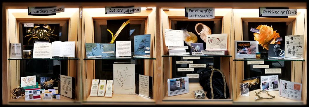 Guin Library Yaquina Bay aquatic invasive species display